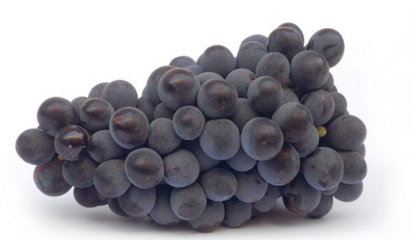 grappolo-uva-santi-dimitri
